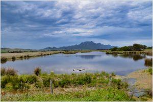 whitemark flinders island