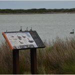 cameron inlet waterbirds flinders island