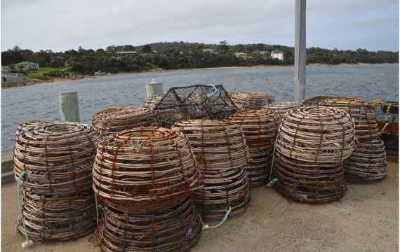 Flinders Island Food Crayfish Festival