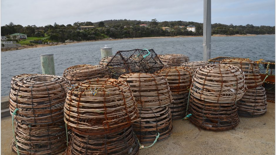 Flinders Island Food Crayfish Festival